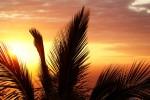 palm-reunion-island-sunset-evening-52548