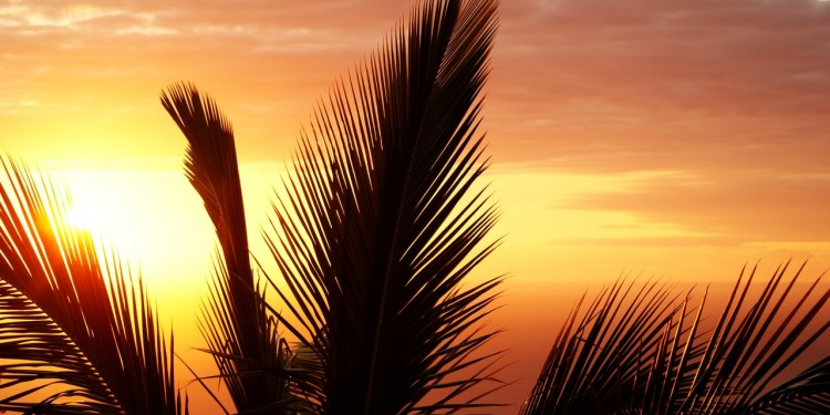 palm-reunion-island-sunset-evening-52548